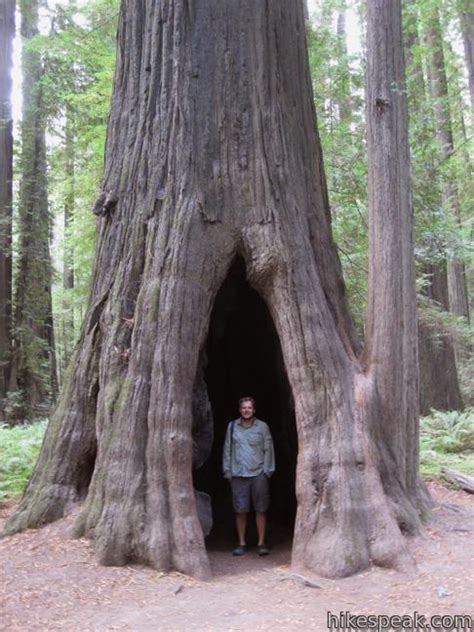 Founders Grove Nature Trail | Humboldt Redwoods State Park